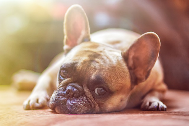 4 Ting du kan gøre for at gøre din hund glad